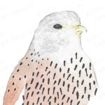 Bird of Prey Painted in Watercolor