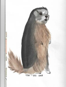 Watercolor Marmot