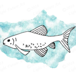 Hand-drawn minnow