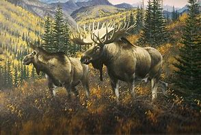 Painting male and female moose