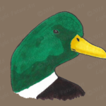 Male Mallard Duck Head Art