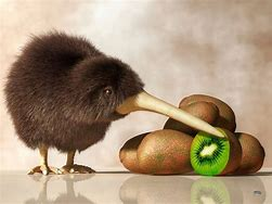 Kiwi Bird Stands Next to Kiwi Food