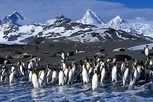 Cold Landscape of Penguin Habitat