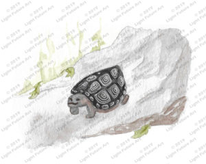 Watercolor Art of a Turtle