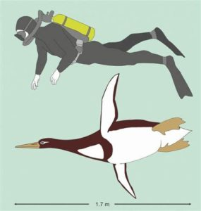 Size of Ancient Penguin to Human