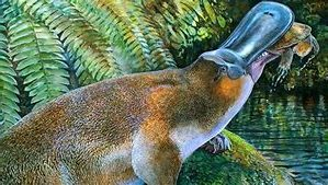 Large Extinct Platypus