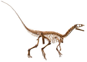 Eoraptor The Earliest Known Dinosaur