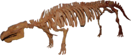 Fossil of Early Manatee Ancestor
