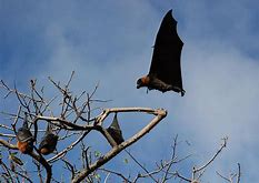 Bats Settling in a Tree
