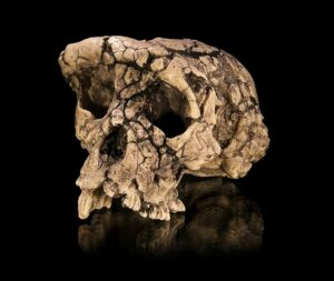 Fossil of Possible Human Ancestor