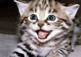Excited Kitten
