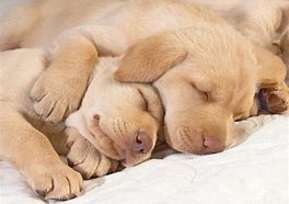 Two Puppies Sleeping