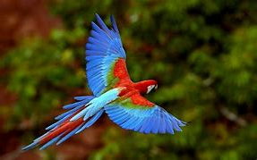 Parrot Soaring Above Trees