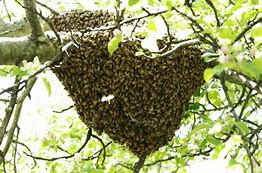 Large Hive of Bees