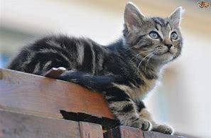 Cat Sitting on Fence