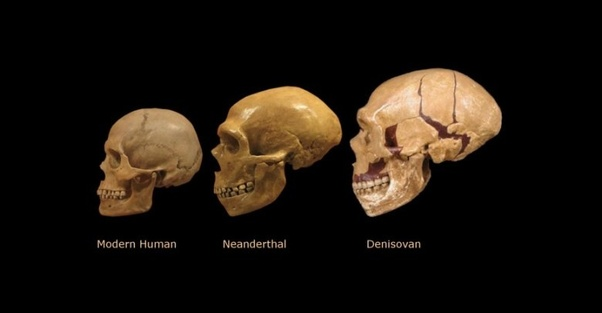 Skulls Sizes Between Prehisoric Human