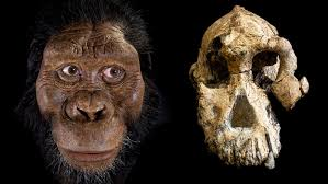Austrolopithecus Skull and Model