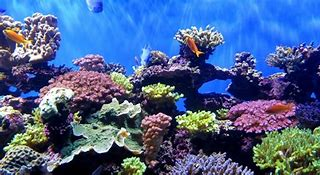 Colorful Ocean Coral