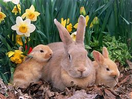 Mother Rabbit with Bunnies