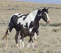 Wild Horse Mother and Baby