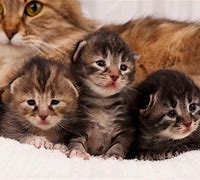 Three Kittens With Mother