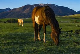 Wild Horses in Meadow