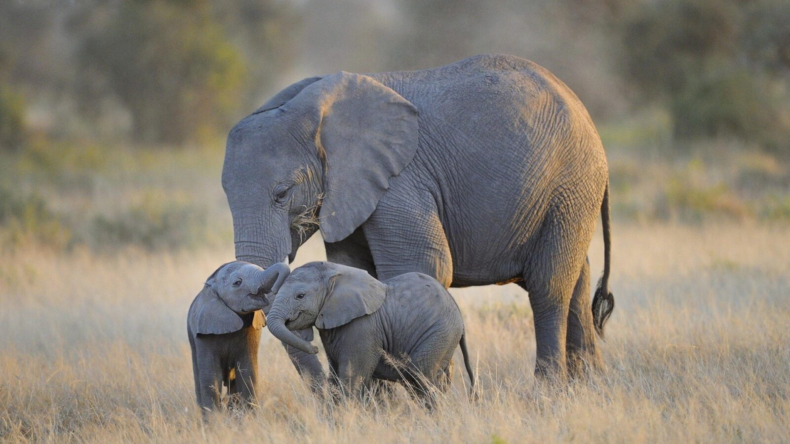 Mother Elephant and Twins
