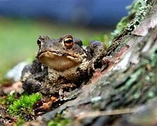 Toad Sitting By Tree
